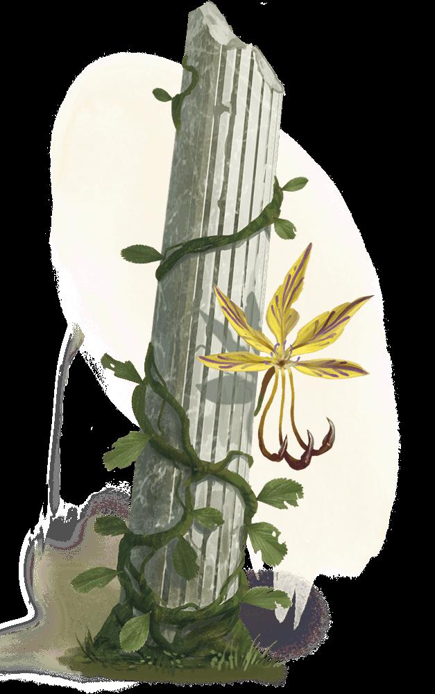 D&D plant